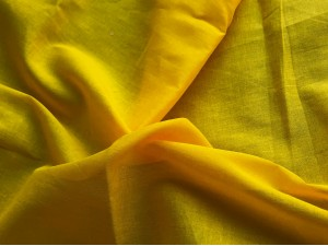 Muslin Sunflower